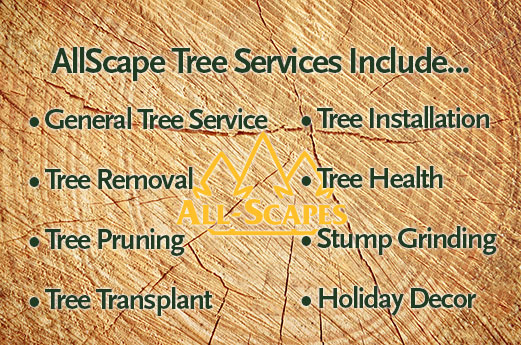 allscape tree services