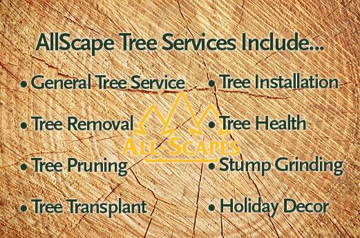 allscape tree services